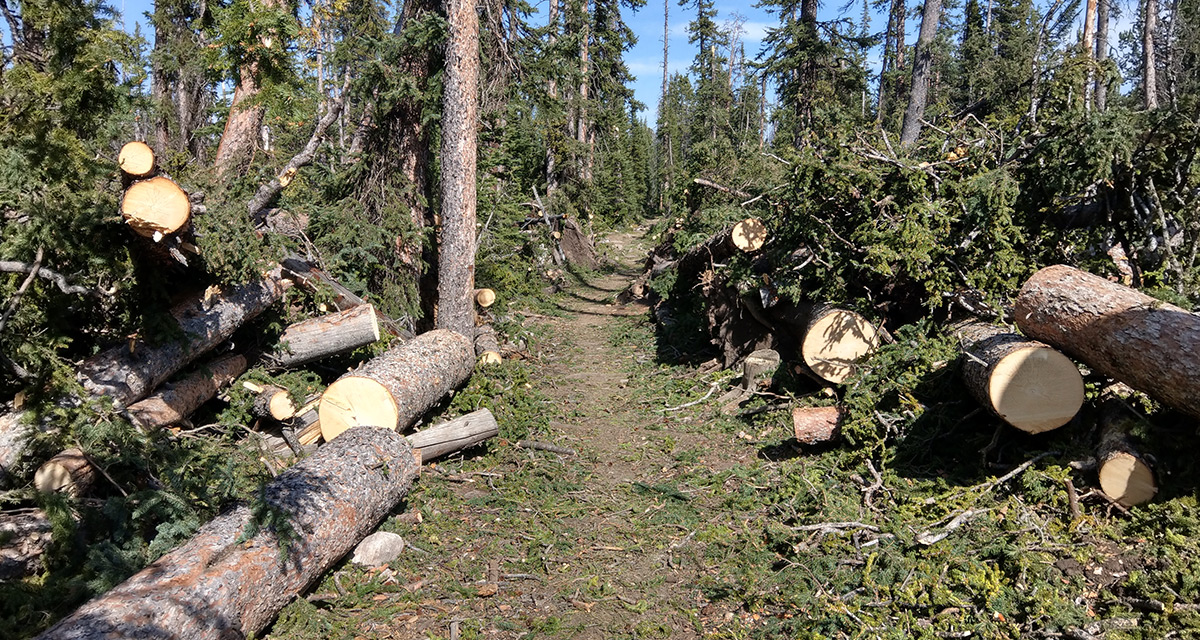 Downed trees along the trail